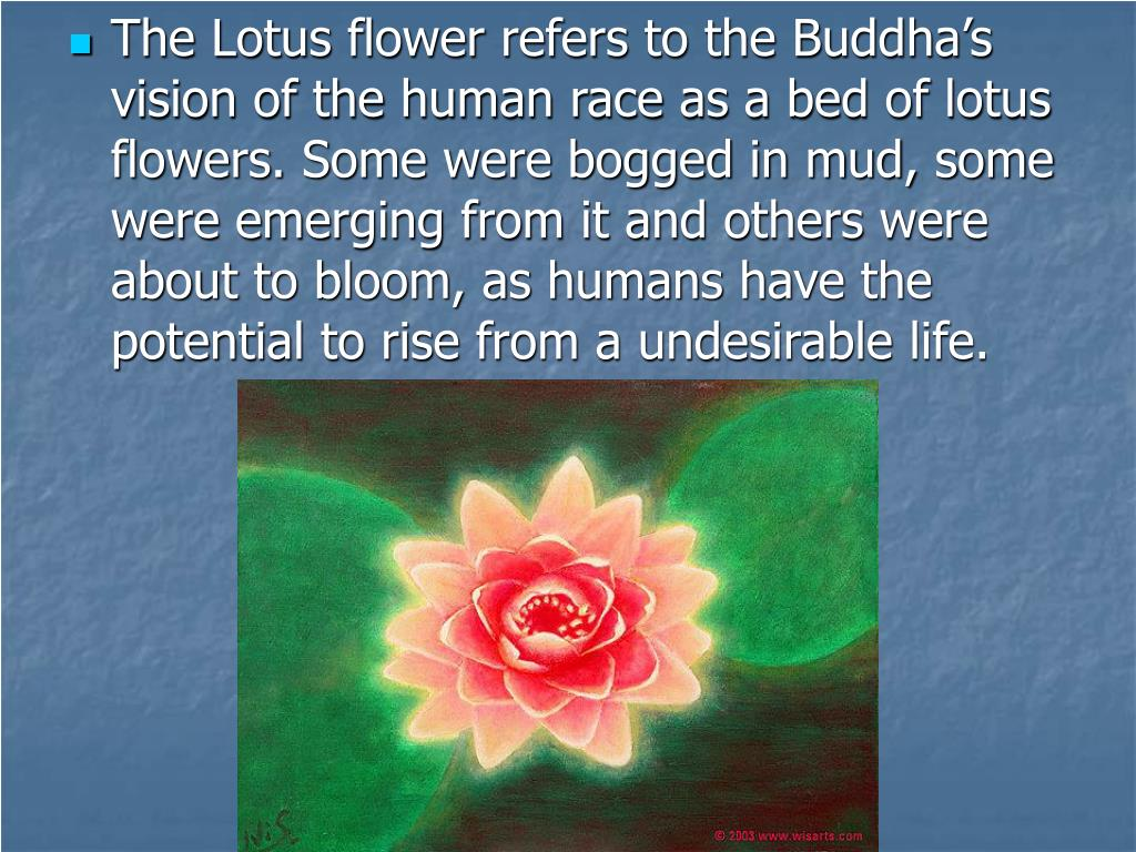 The Lotus flower refers to the Buddha's vision of the human race as a bed of lotus flowers. Some were bogged in mud, some were emerging from it and others were about to bloom, as humans have the potential to rise from a undesirable life.