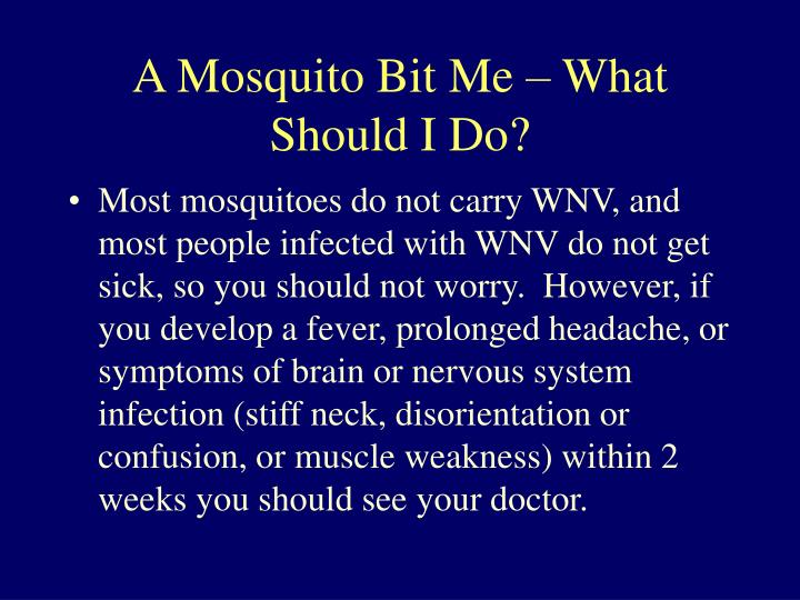 A Mosquito Bit Me – What Should I Do?