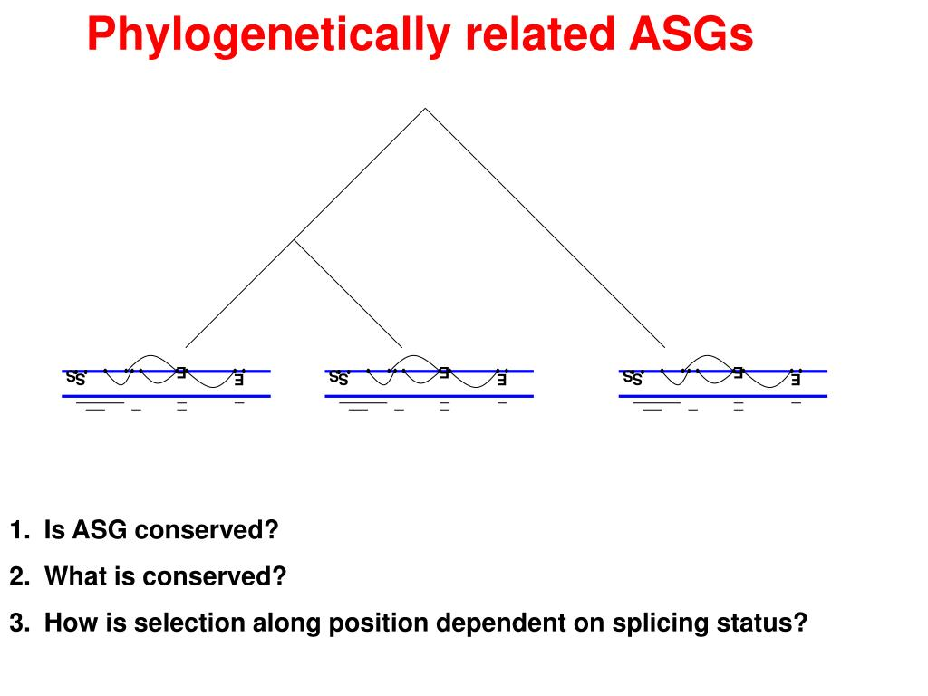 Phylogenetically related ASGs