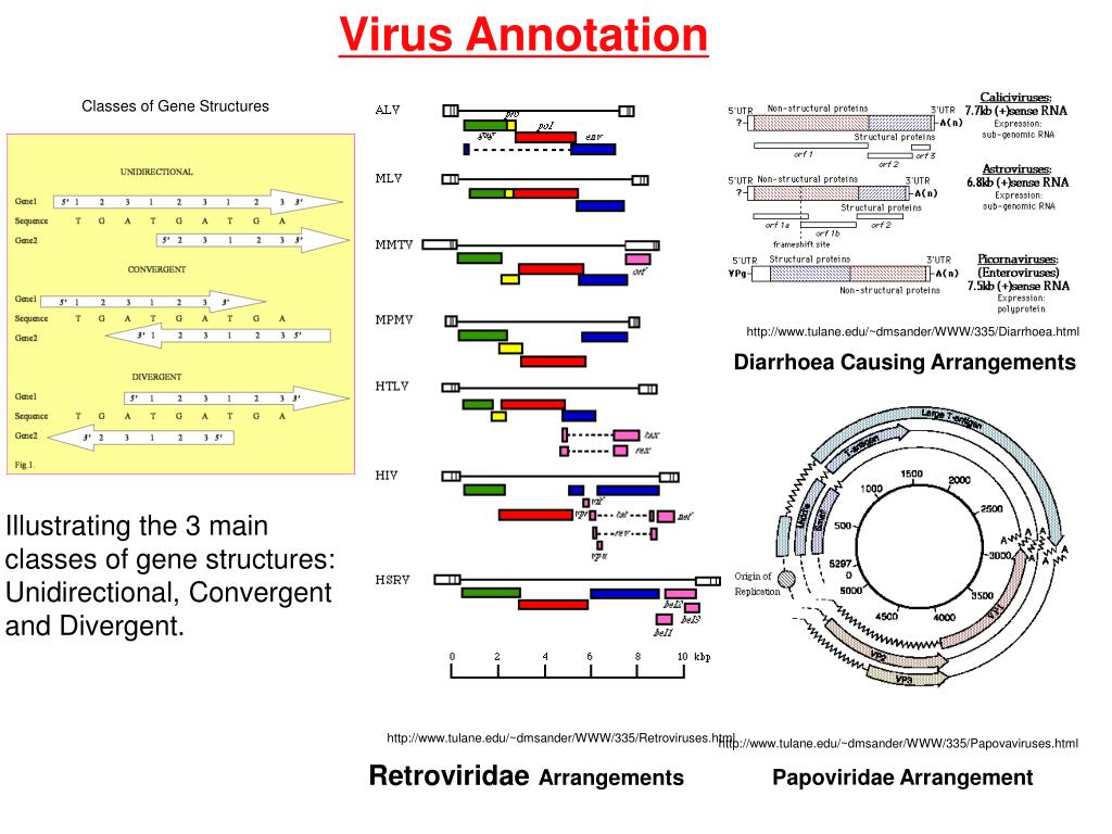 Virus Annotation