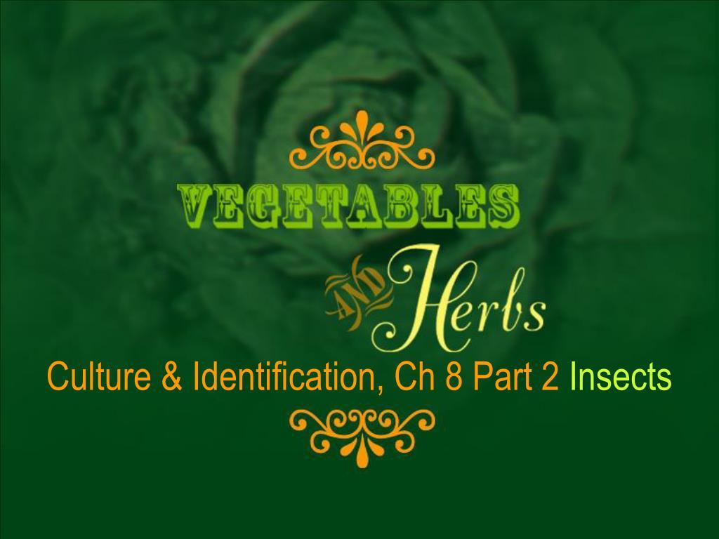Culture & Identification, Ch 8 Part 2