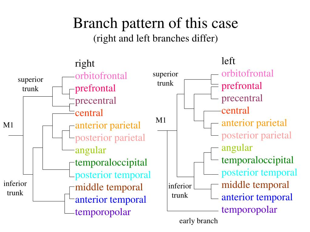 Branch pattern of this case