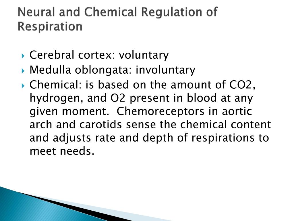 Neural and Chemical Regulation of Respiration