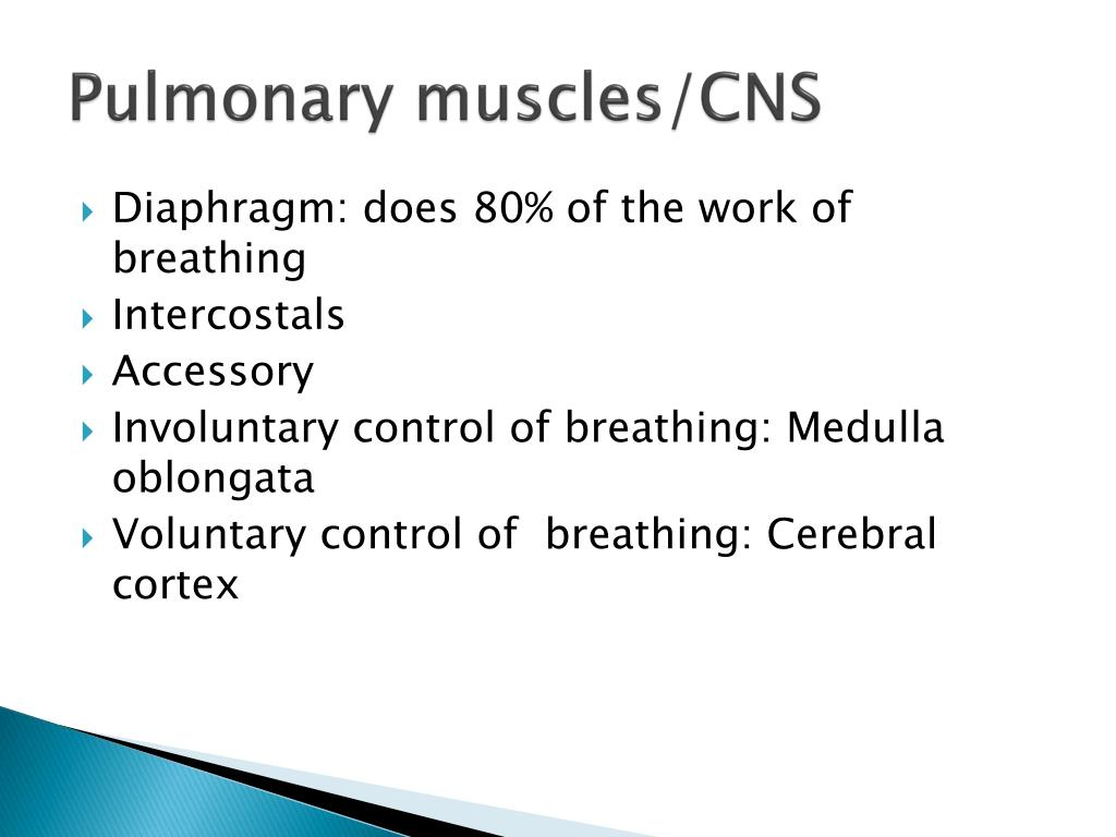 Pulmonary muscles/CNS