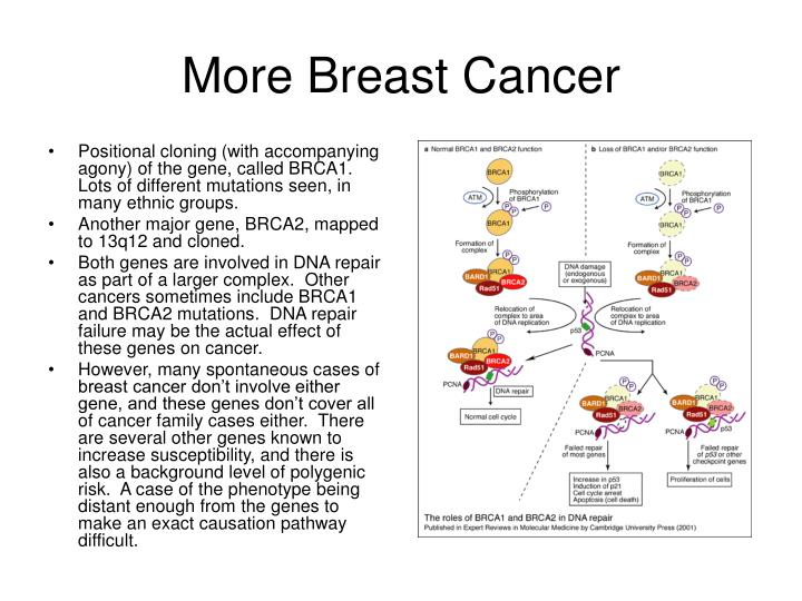 More Breast Cancer