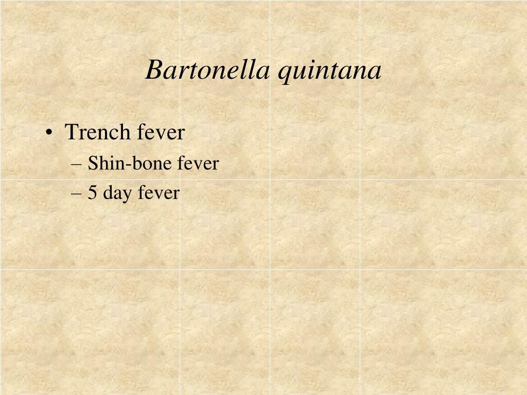 Bartonella quintana