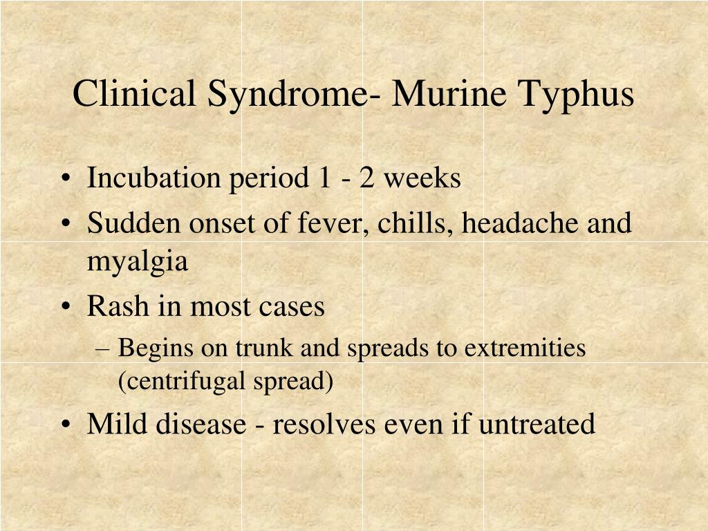 Clinical Syndrome- Murine Typhus