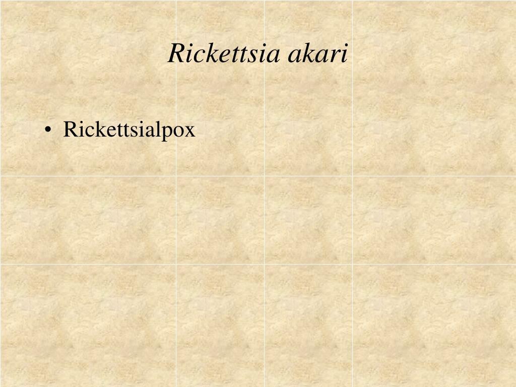 Rickettsia akari