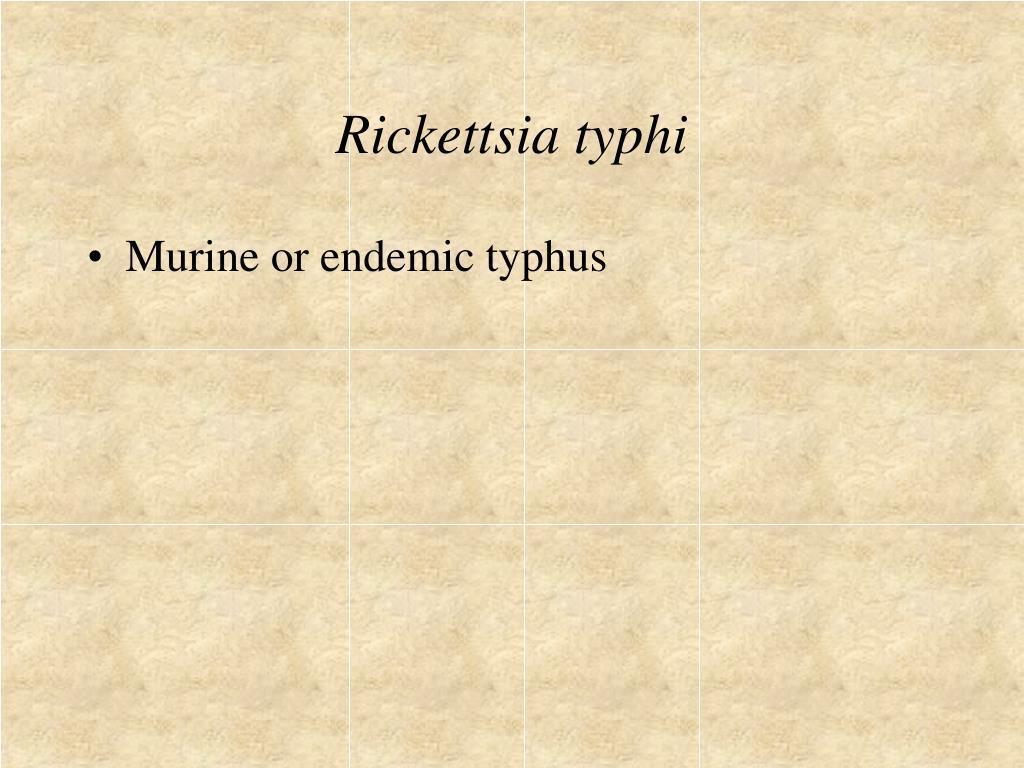 Rickettsia typhi