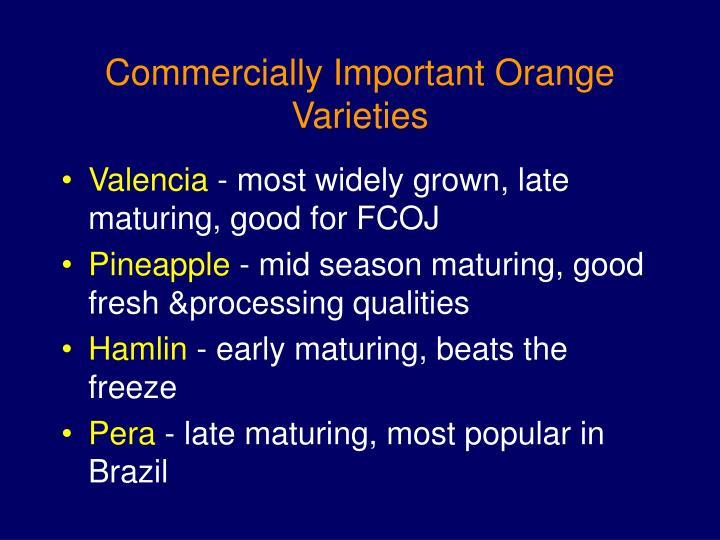 Commercially Important Orange Varieties