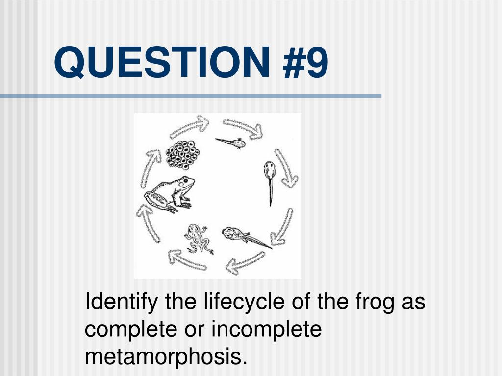 QUESTION #9