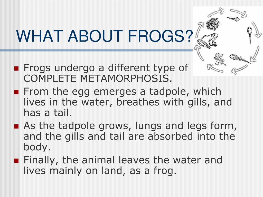 WHAT ABOUT FROGS?