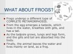 what about frogs