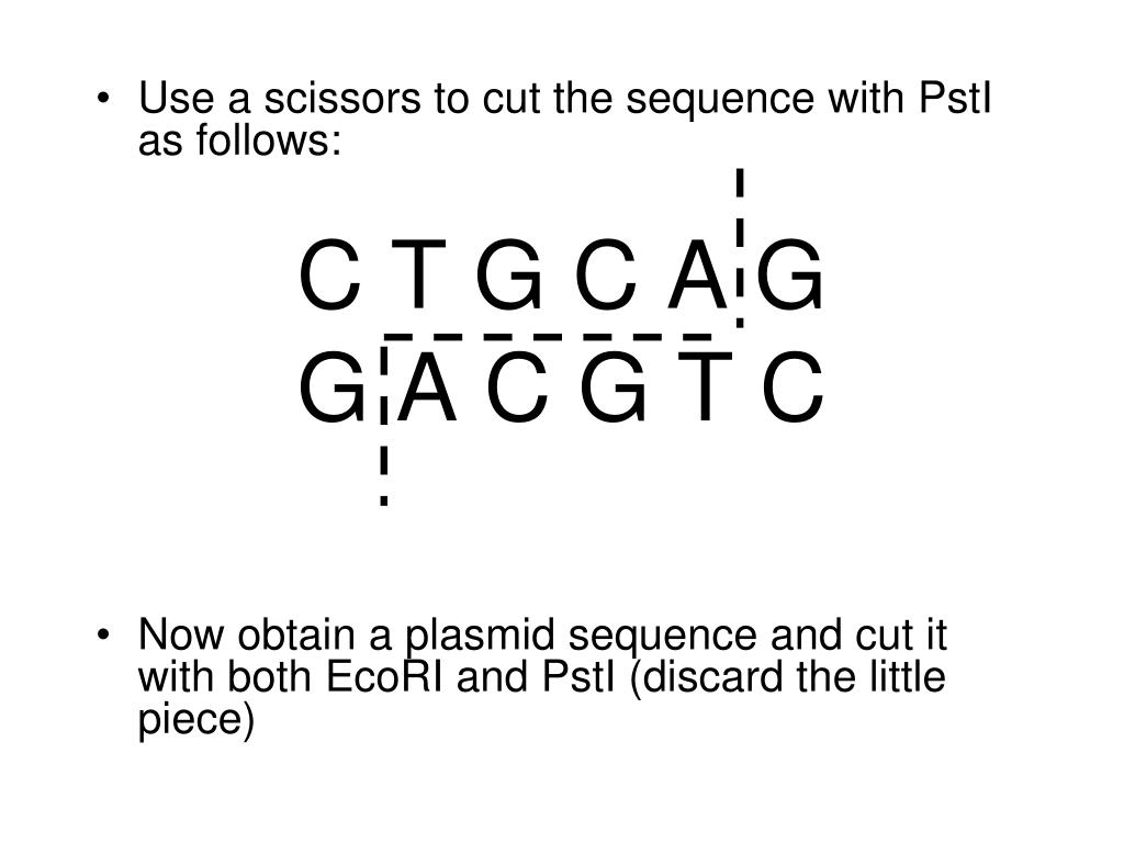 Use a scissors to cut the sequence with PstI as follows: