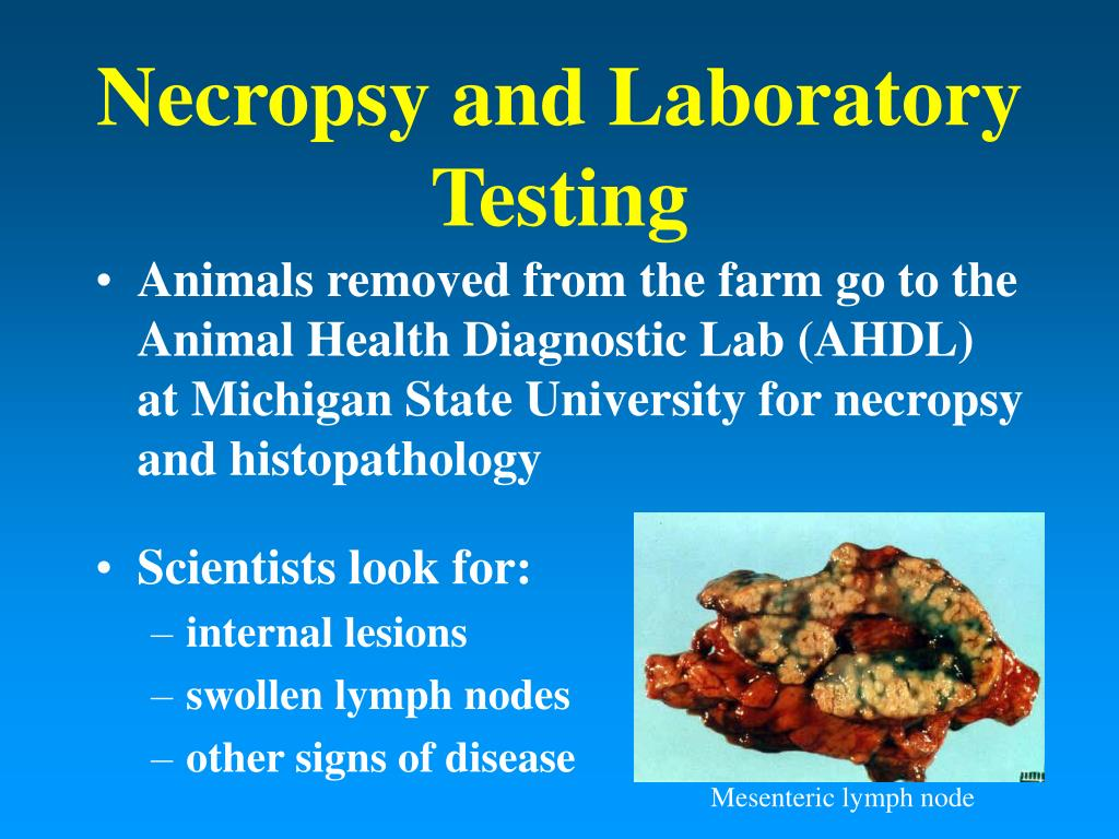 Necropsy and Laboratory Testing