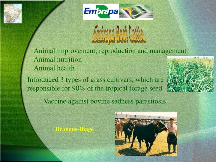 Embrapa Beef Cattle