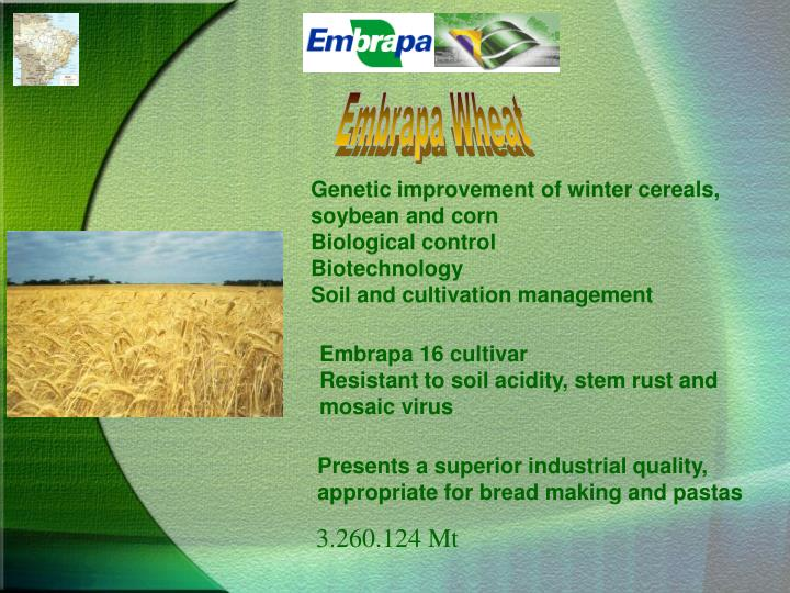 Embrapa Wheat