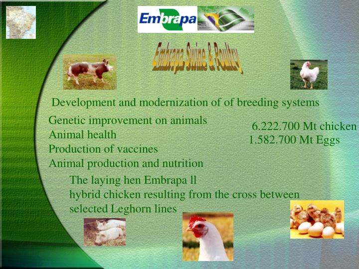 Embrapa Swine & Poultry