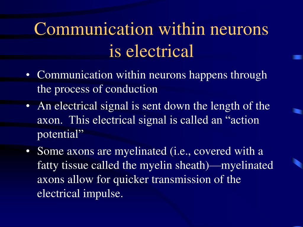 Communication within neurons is electrical