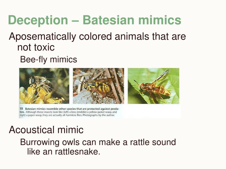 Deception – Batesian mimics