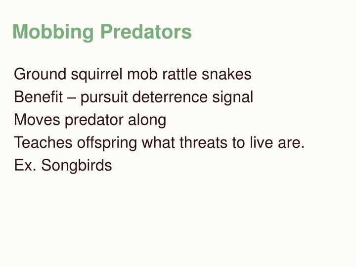 Mobbing Predators