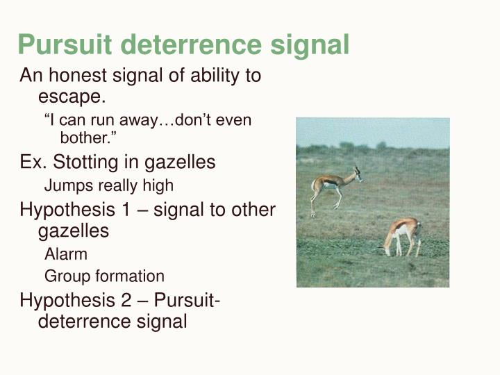 Pursuit deterrence signal