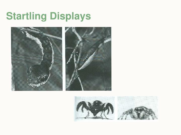 Startling Displays
