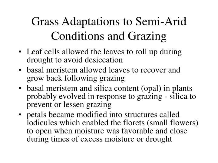 Grass Adaptations to Semi-Arid Conditions and Grazing