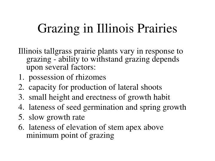 Grazing in Illinois Prairies
