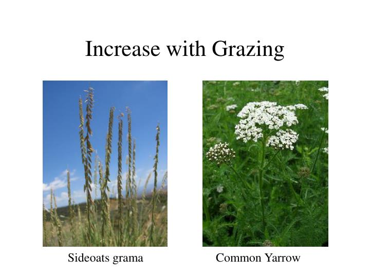 Increase with Grazing
