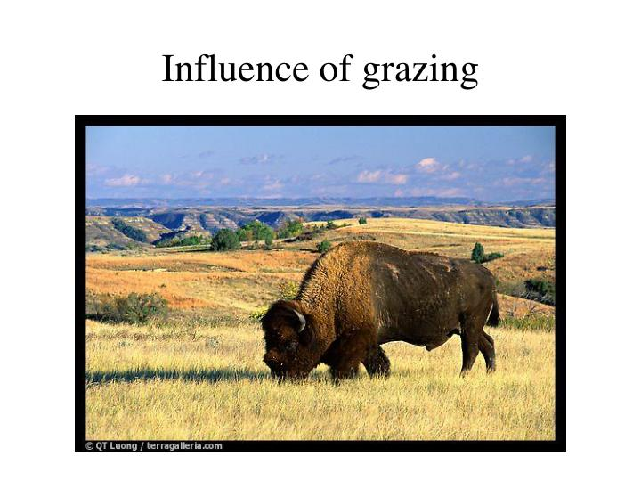 Influence of grazing
