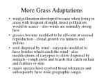 more grass adaptations
