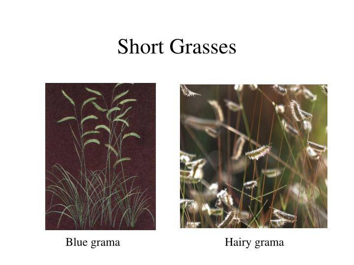 Short Grasses