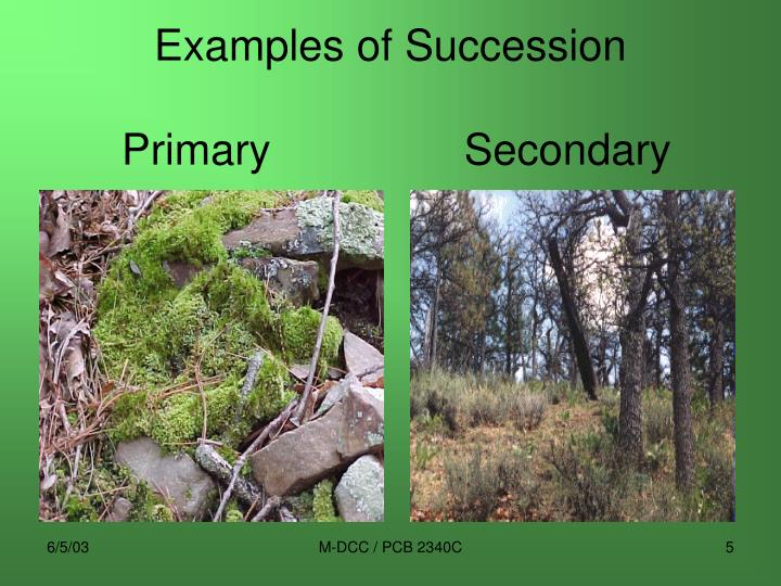 Examples of Succession