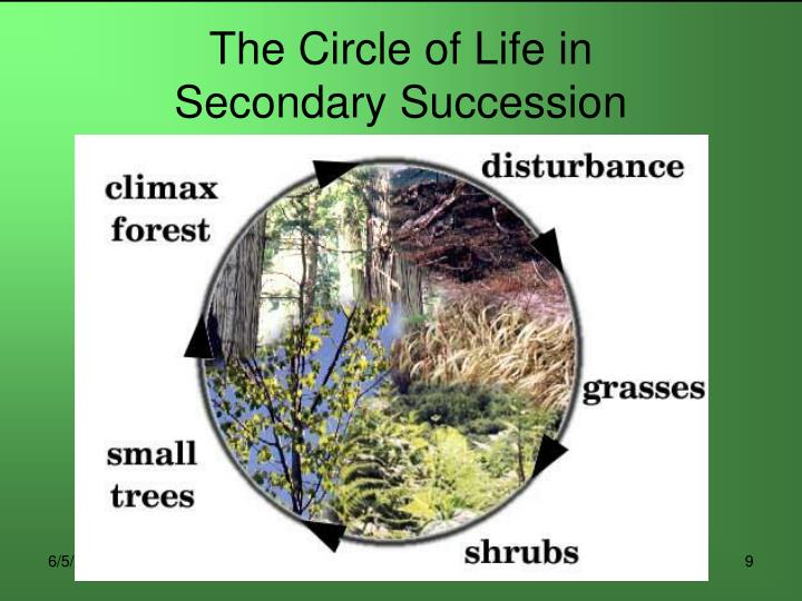 The Circle of Life in