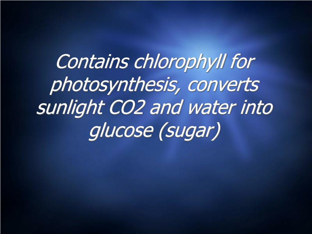 Contains chlorophyll for photosynthesis, converts sunlight CO2 and water into glucose (sugar)