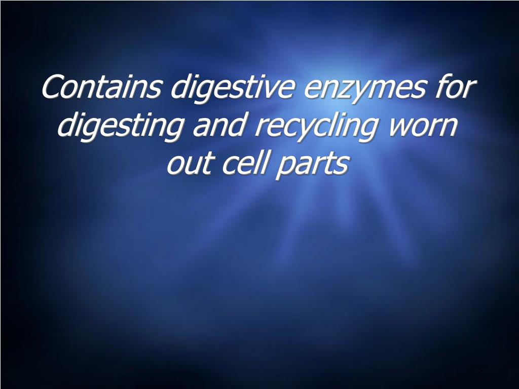 Contains digestive enzymes for digesting and recycling worn out cell parts