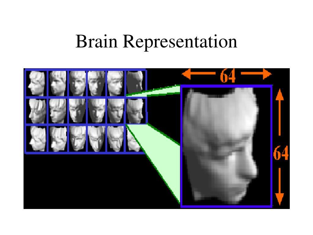 Brain Representation