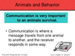 animals and behavior80