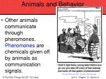 animals and behavior83