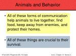 animals and behavior85