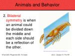 animals and behavior91
