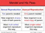 mendel and his peas38