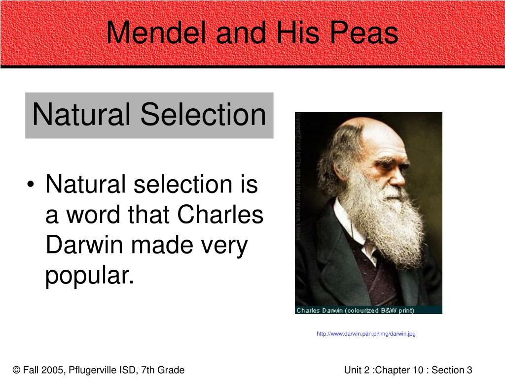 Mendel and His Peas