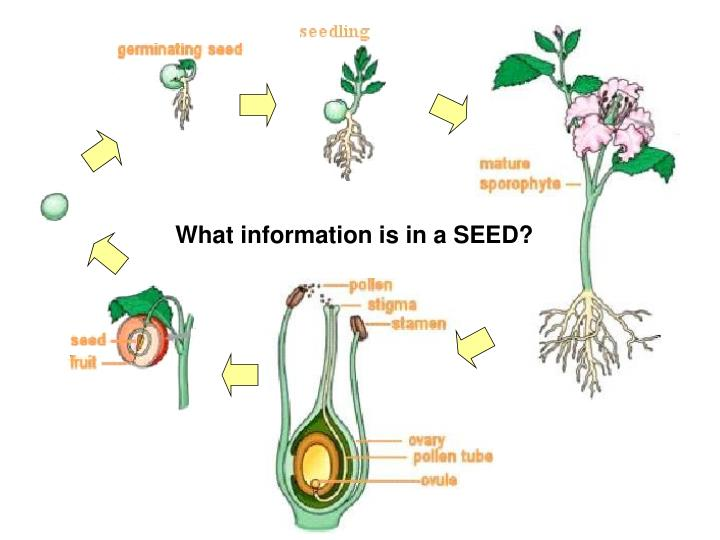 What information is in a SEED?