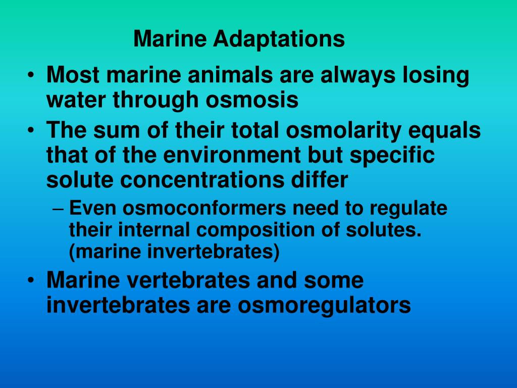 Marine Adaptations