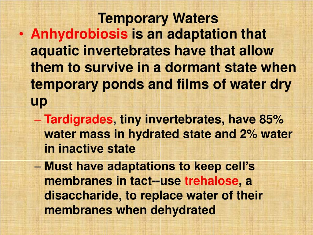 Temporary Waters