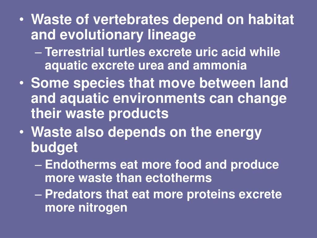 Waste of vertebrates depend on habitat and evolutionary lineage
