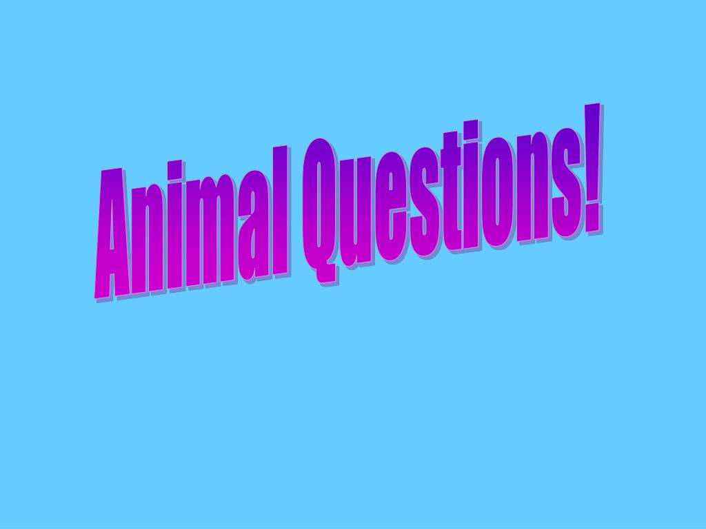 Animal Questions!