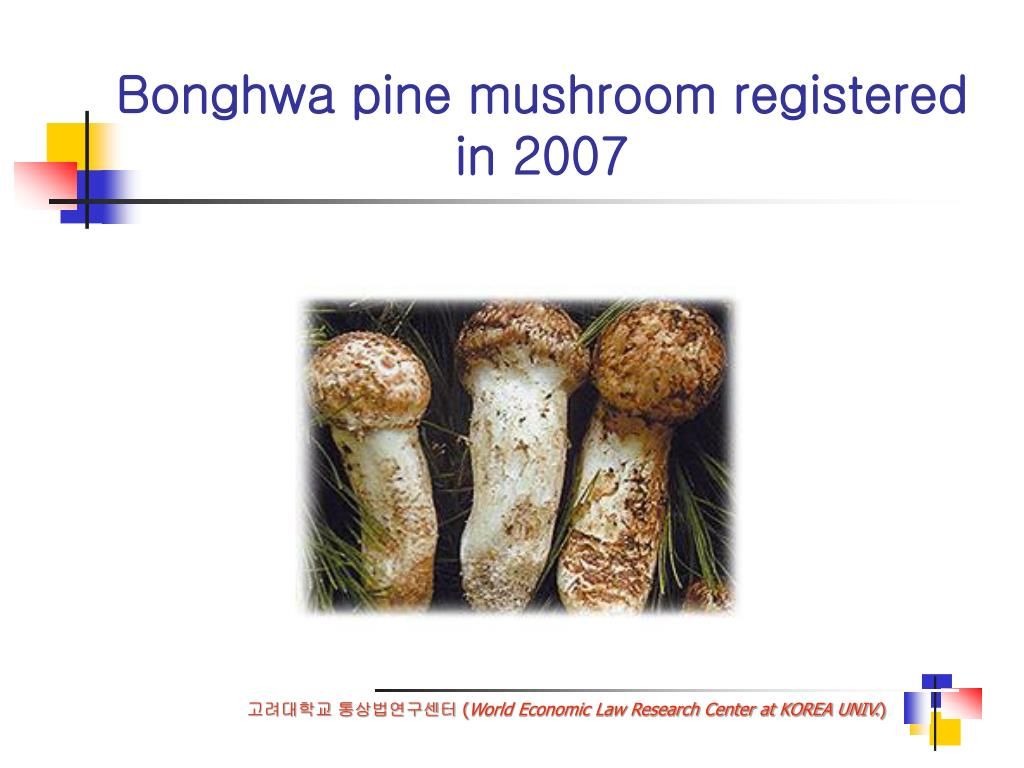Bonghwa pine mushroom registered in 2007